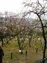 Bairin_2010
